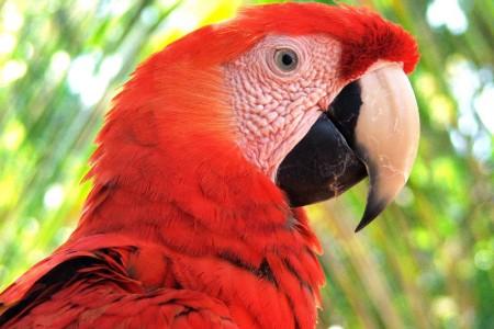 MacawCloseUp_big