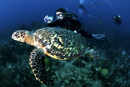 World Class Diving from Victoria House, Belize