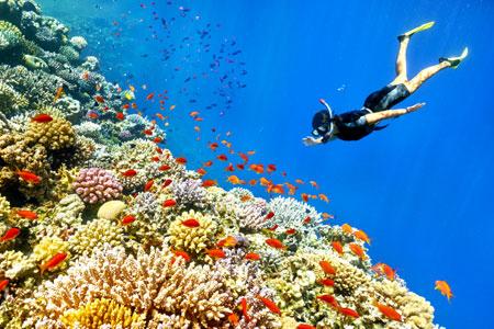 Belize Snorkel Central America