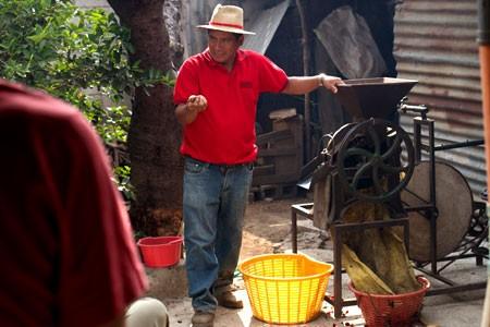 Coffee Agriculture Guatemala Honduras Costa Rica