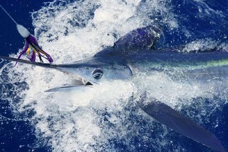 450x300_fishing02