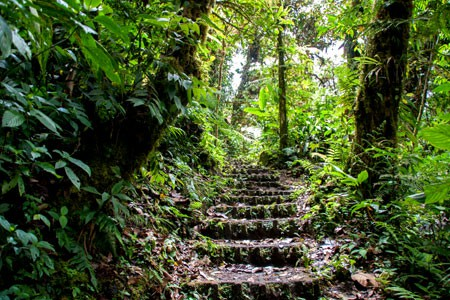 Monteverde Rainforest & Birding Costa RIca