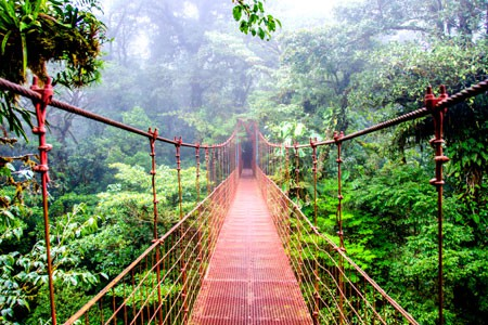 Monteverde Cloud Forest and Bird Watching Costa Rica