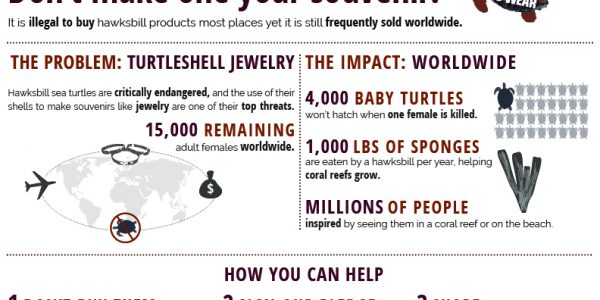 hawksbill_infographic
