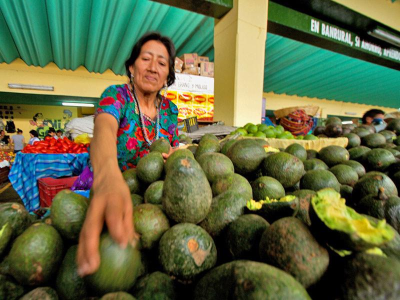 avocado-market-antigua-guatemala