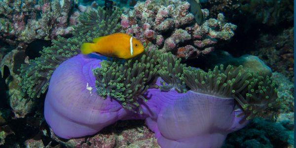 coral-reef-trtw22
