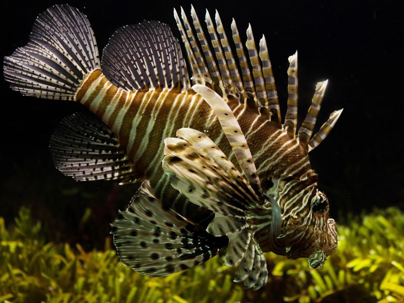 lionfish-mailchimp