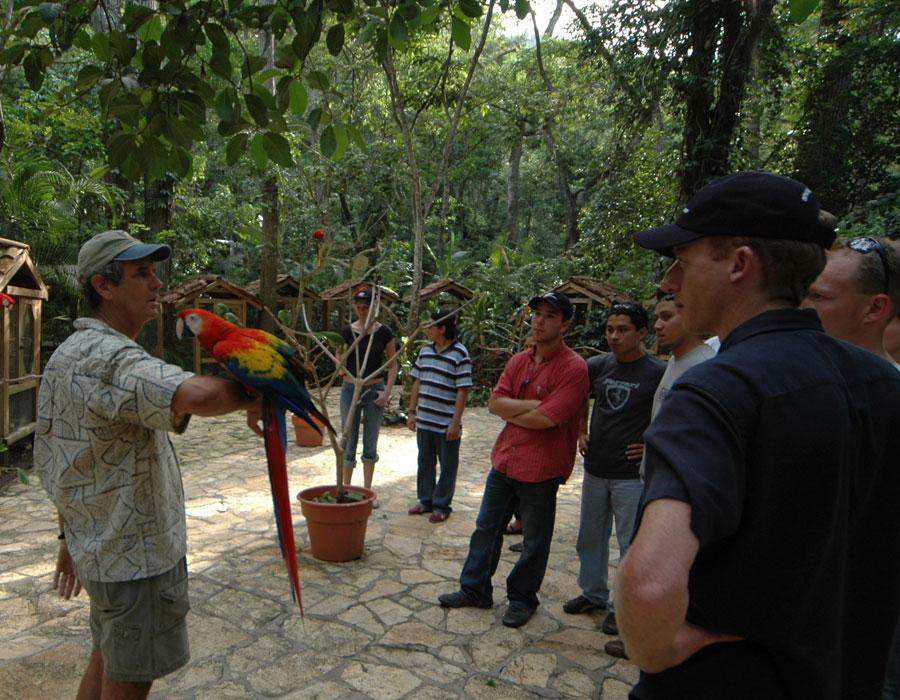 macaw-copan-2