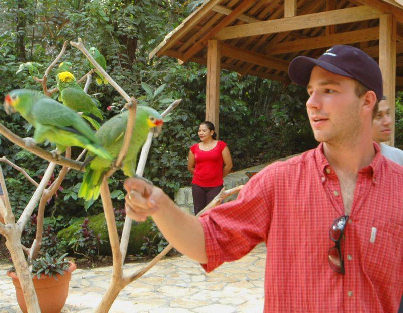 macaw-copan-6