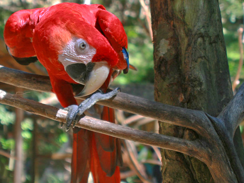 macaw-mountain-honduras-tours