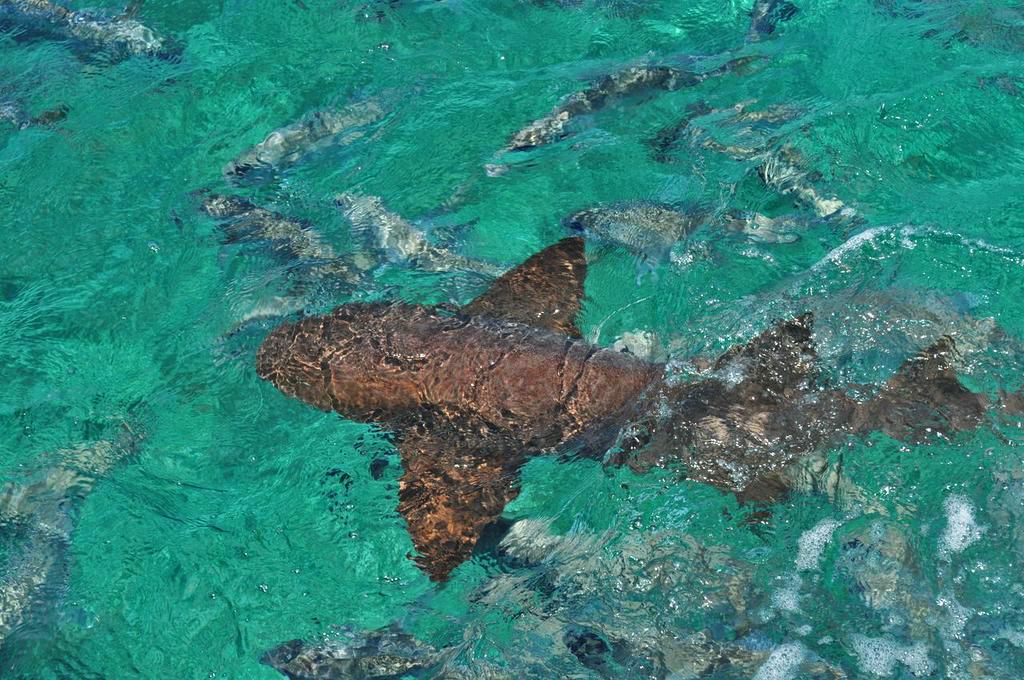 marine-life-in-natural-habitat-caye-caulker
