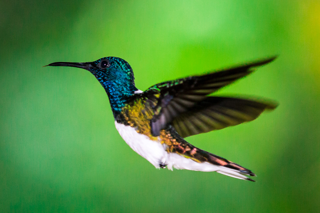 pico-bonito-honduras-wildlife
