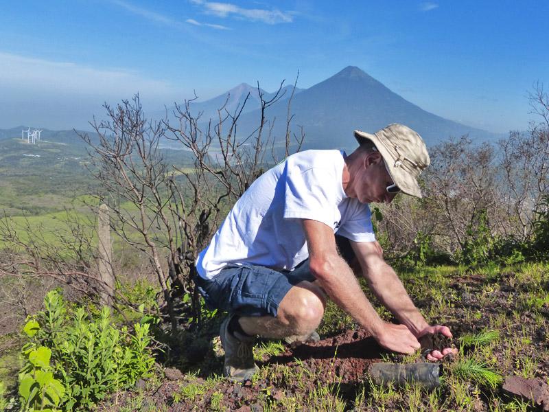plant-tree-pacaya-volcano