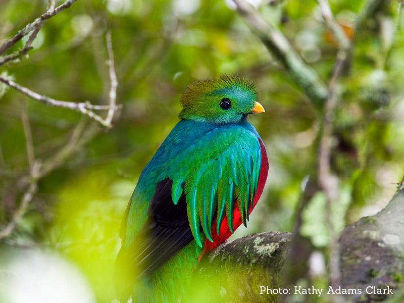 quetzal-costa-rica