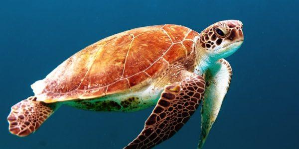sea-turtle-trtw23