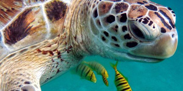 sea-turtles-viaventure-stand-up