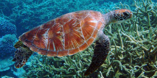 turtle-coraltrtw24